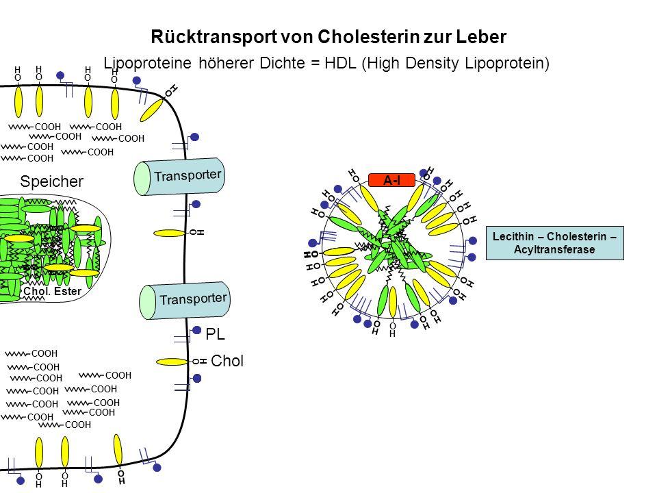 O H O H Speicher Rücktransport von Cholesterin zur Leber Transporter Lecithin – Cholesterin – Acyltransferase Lipoproteine höherer Dichte = HDL (High
