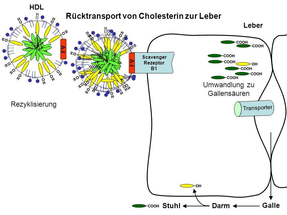 O H O H O H O H O H O H O H O H Leber Rücktransport von Cholesterin zur Leber Umwandlung zu Gallensäuren Galle DarmStuhl HDL Rezyklisierung A-I O H O