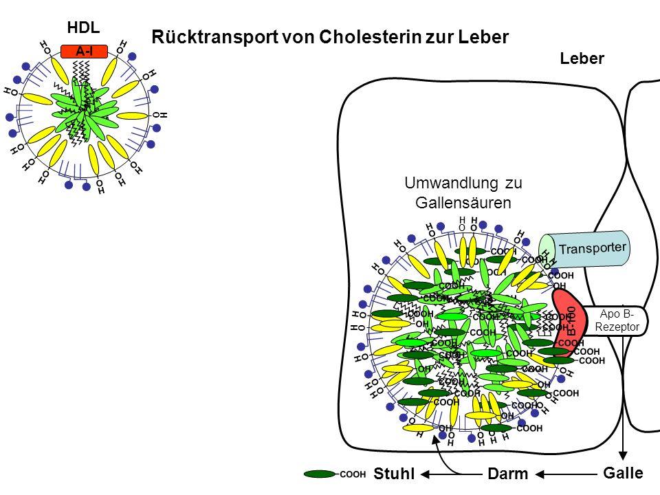 B-100 Leber Rücktransport von Cholesterin zur Leber Umwandlung zu Gallensäuren Galle DarmStuhl HDL A-I O H O H O H O H O H O H O H O H O H O H O H COO