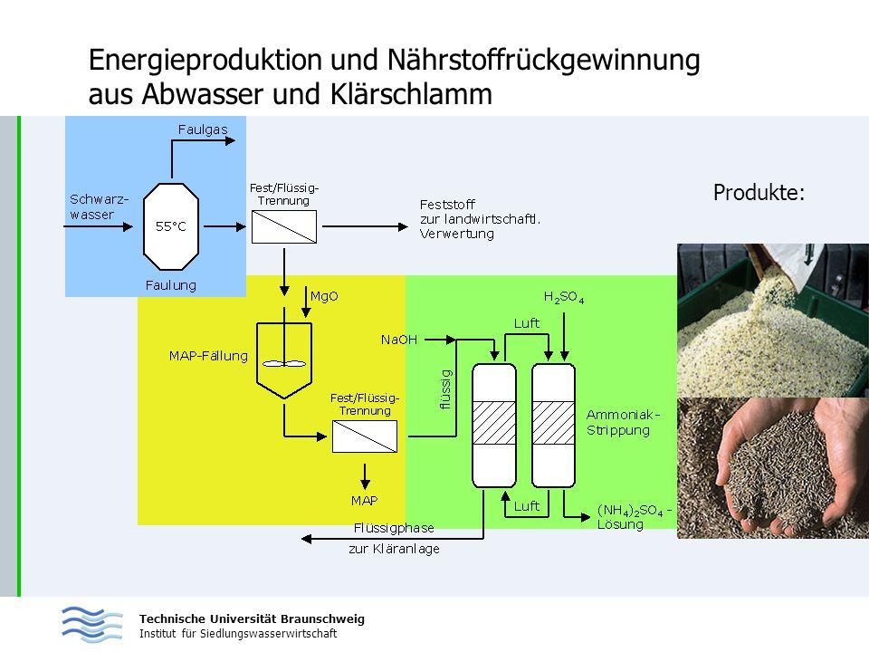 Technische Universität Braunschweig Institut für Siedlungswasserwirtschaft Energieproduktion und Nährstoffrückgewinnung aus Abwasser und Klärschlamm P