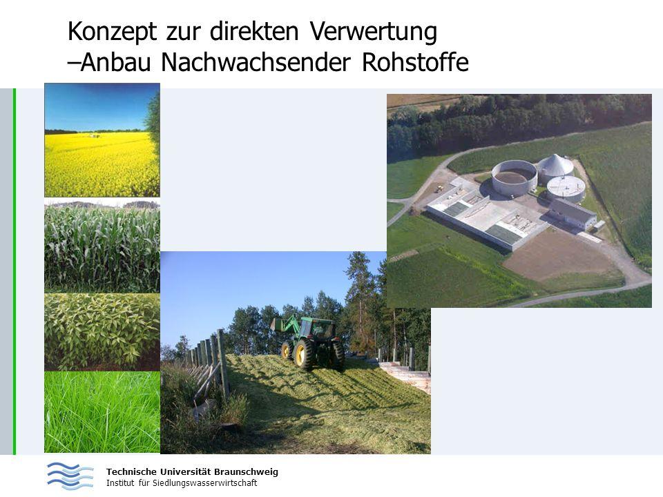 Technische Universität Braunschweig Institut für Siedlungswasserwirtschaft Konzept zur direkten Verwertung –Anbau Nachwachsender Rohstoffe