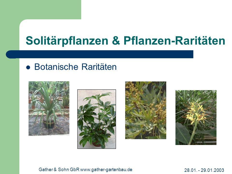 28.01. - 29.01.2003 Gather & Sohn GbR www.gather-gartenbau.de Solitärpflanzen & Pflanzen-Raritäten Botanische Raritäten