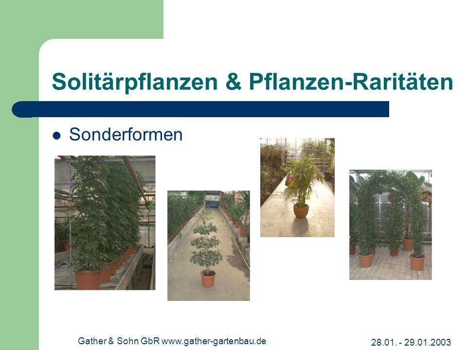 28.01. - 29.01.2003 Gather & Sohn GbR www.gather-gartenbau.de Solitärpflanzen & Pflanzen-Raritäten Sonderformen