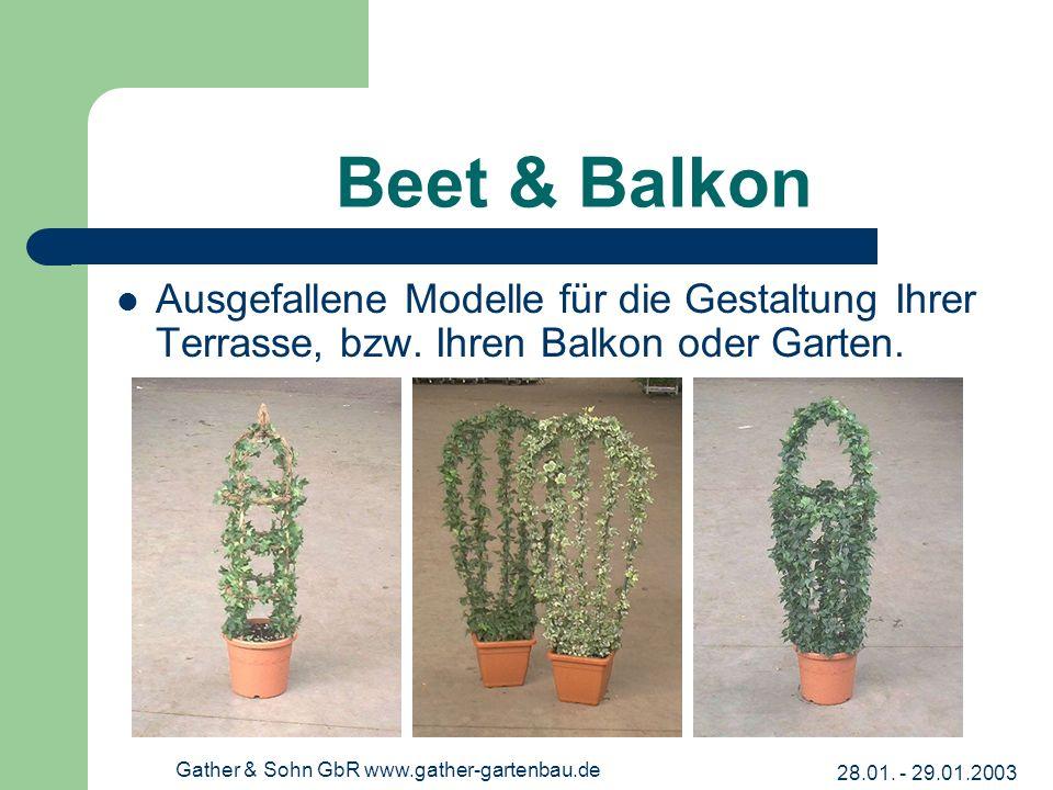 28.01. - 29.01.2003 Gather & Sohn GbR www.gather-gartenbau.de Beet & Balkon Ausgefallene Modelle für die Gestaltung Ihrer Terrasse, bzw. Ihren Balkon