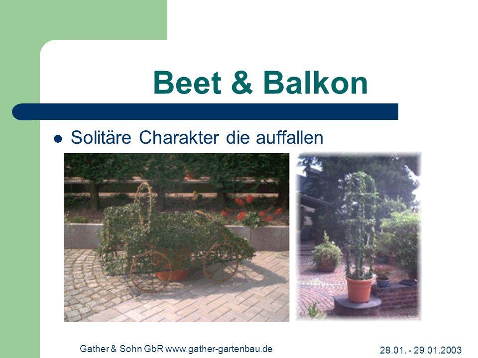 28.01. - 29.01.2003 Gather & Sohn GbR www.gather-gartenbau.de Beet & Balkon Solitäre Charakter die auffallen