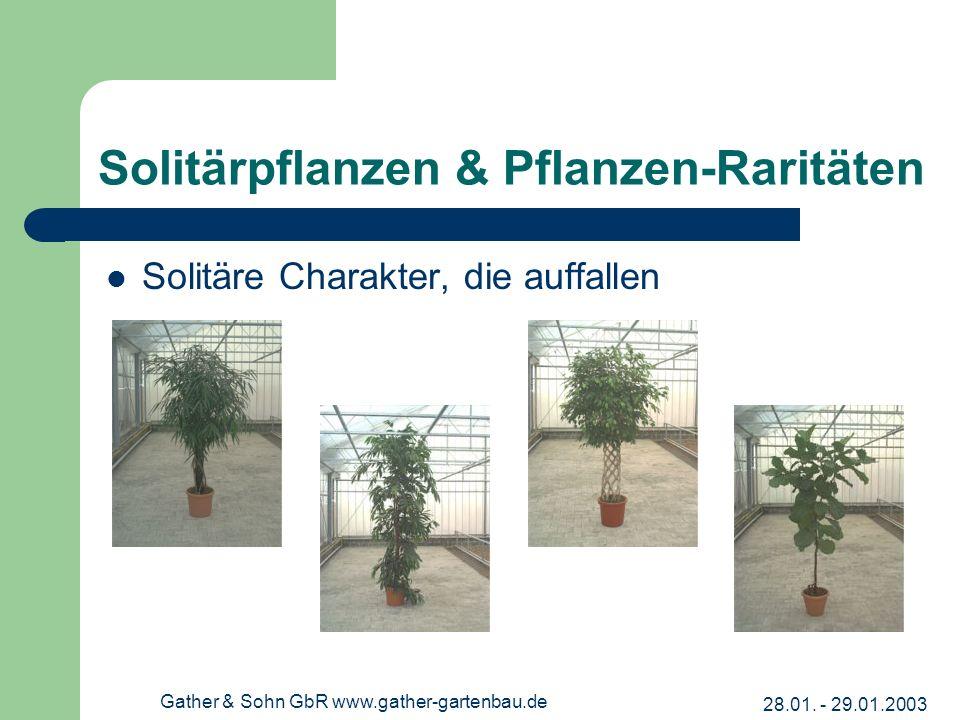 28.01. - 29.01.2003 Gather & Sohn GbR www.gather-gartenbau.de Solitärpflanzen & Pflanzen-Raritäten Solitäre Charakter, die auffallen