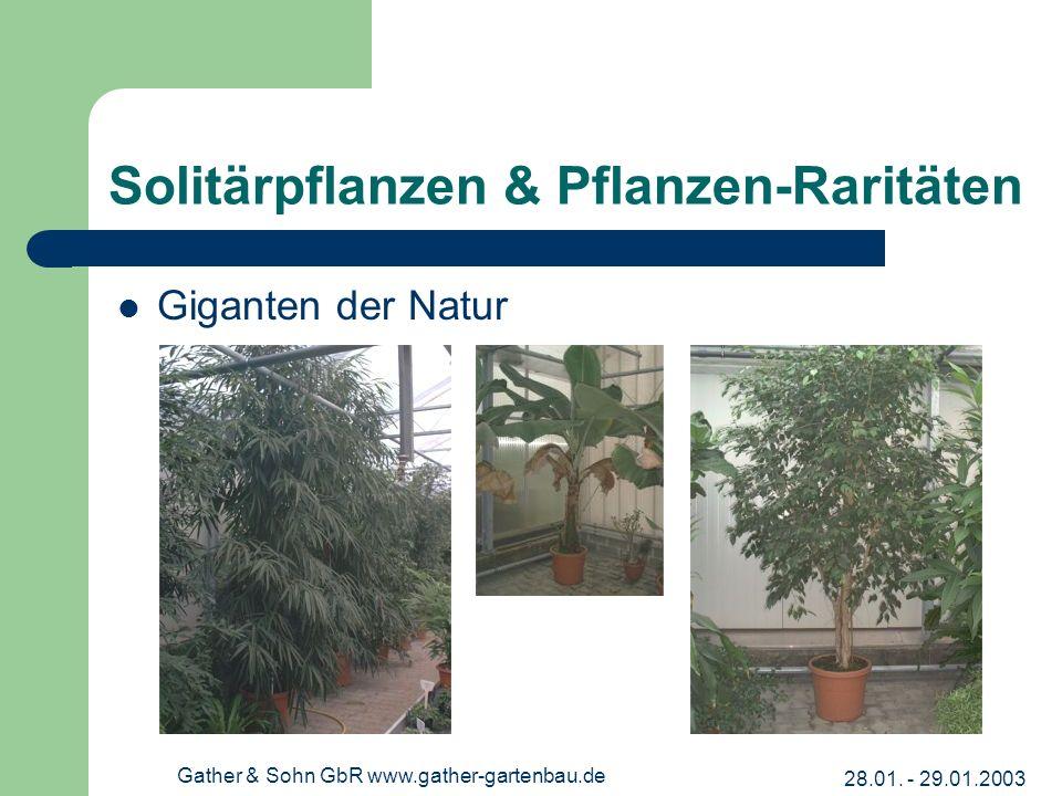 28.01. - 29.01.2003 Gather & Sohn GbR www.gather-gartenbau.de Solitärpflanzen & Pflanzen-Raritäten Giganten der Natur