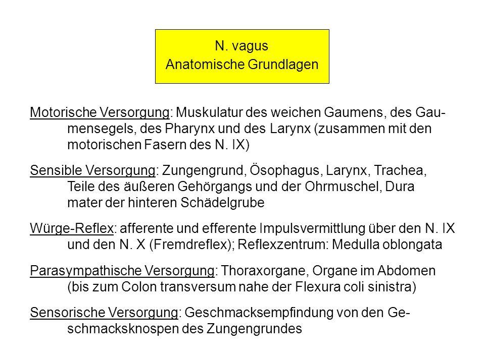 N. vagus Anatomische Grundlagen Motorische Versorgung: Muskulatur des weichen Gaumens, des Gau- mensegels, des Pharynx und des Larynx (zusammen mit de