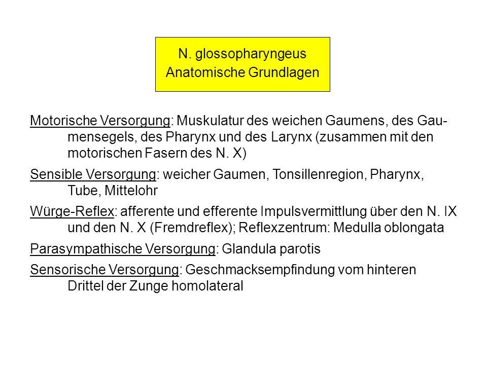 N. glossopharyngeus Anatomische Grundlagen Motorische Versorgung: Muskulatur des weichen Gaumens, des Gau- mensegels, des Pharynx und des Larynx (zusa