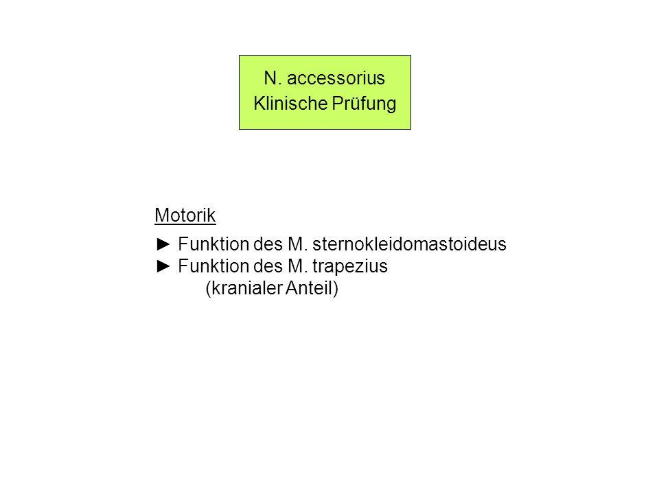 N. accessorius Klinische Prüfung Motorik Funktion des M. sternokleidomastoideus Funktion des M. trapezius (kranialer Anteil)