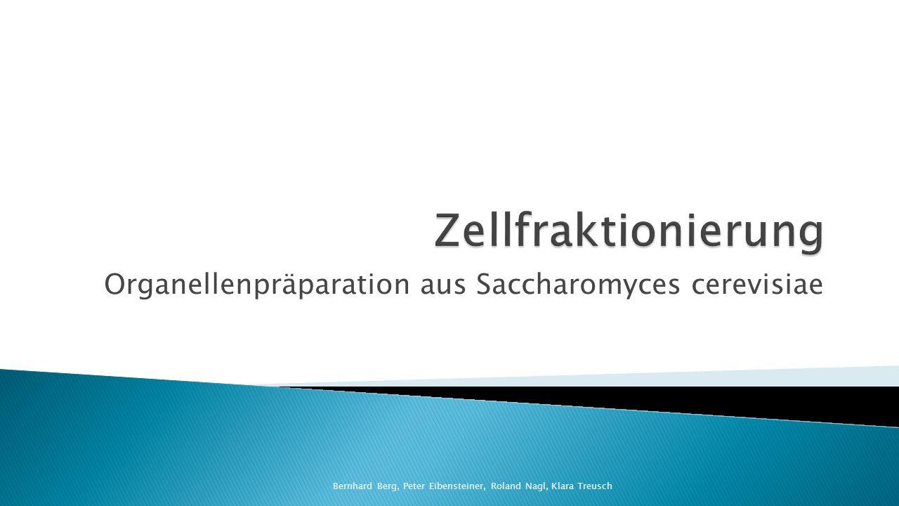 Organellenpräparation aus Saccharomyces cerevisiae Bernhard Berg, Peter Eibensteiner, Roland Nagl, Klara Treusch