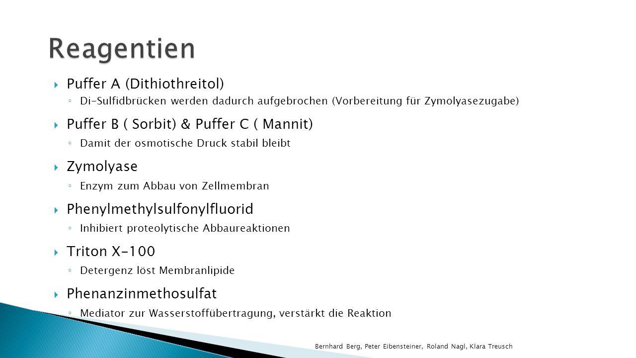 Puffer A (Dithiothreitol) Di-Sulfidbrücken werden dadurch aufgebrochen (Vorbereitung für Zymolyasezugabe) Puffer B ( Sorbit) & Puffer C ( Mannit) Dami