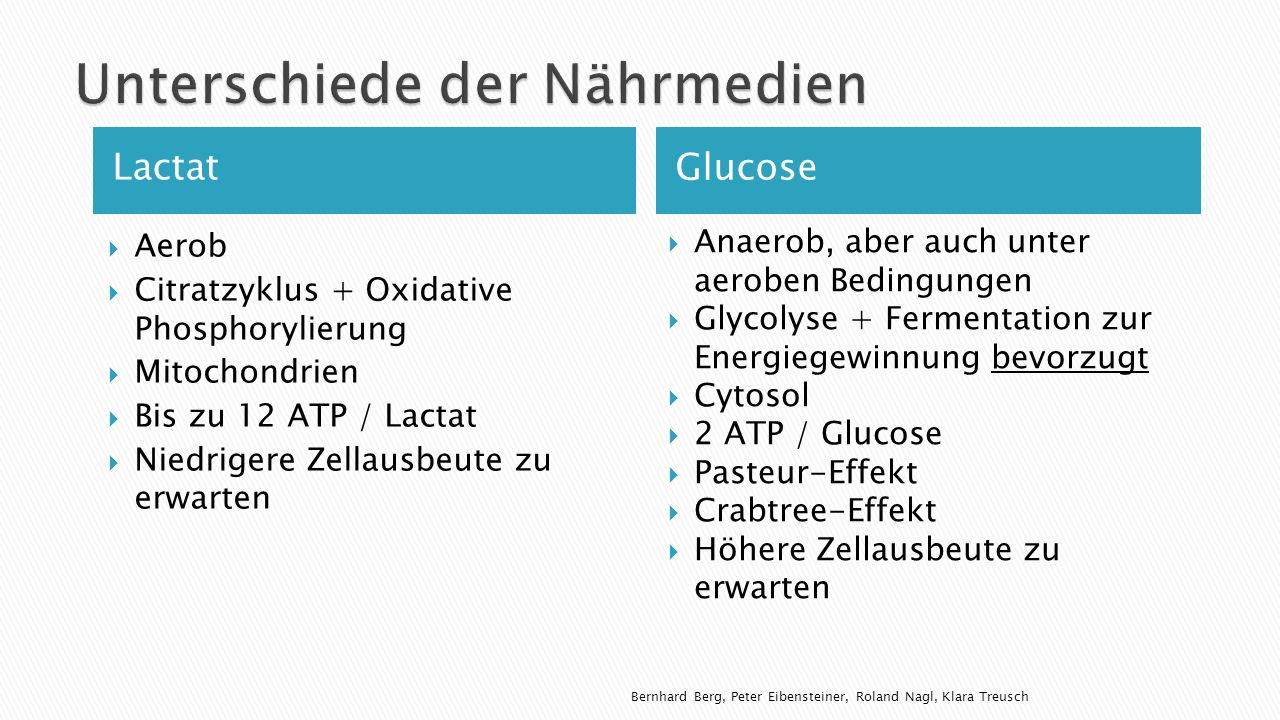 Lactat Glucose Aerob Citratzyklus + Oxidative Phosphorylierung Mitochondrien Bis zu 12 ATP / Lactat Niedrigere Zellausbeute zu erwarten Anaerob, aber auch unter aeroben Bedingungen Glycolyse + Fermentation zur Energiegewinnung bevorzugt Cytosol 2 ATP / Glucose Pasteur-Effekt Crabtree-Effekt Höhere Zellausbeute zu erwarten Bernhard Berg, Peter Eibensteiner, Roland Nagl, Klara Treusch