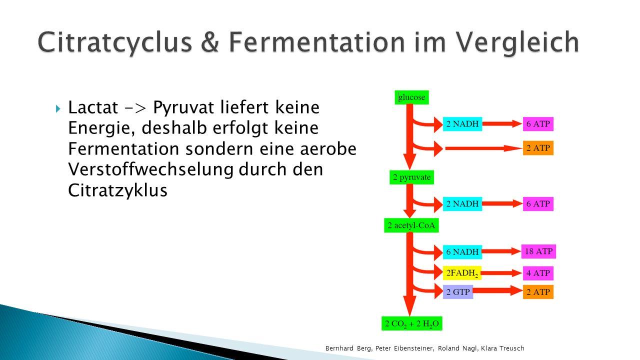 Lactat -> Pyruvat liefert keine Energie, deshalb erfolgt keine Fermentation sondern eine aerobe Verstoffwechselung durch den Citratzyklus Bernhard Berg, Peter Eibensteiner, Roland Nagl, Klara Treusch