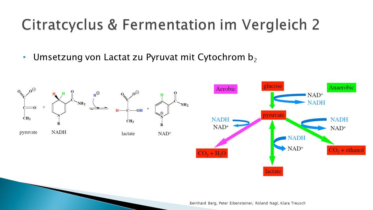 Umsetzung von Lactat zu Pyruvat mit Cytochrom b 2 Bernhard Berg, Peter Eibensteiner, Roland Nagl, Klara Treusch