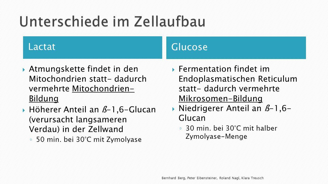 Lactat Glucose Atmungskette findet in den Mitochondrien statt- dadurch vermehrte Mitochondrien- Bildung Höherer Anteil an ß-1,6-Glucan (verursacht langsameren Verdau) in der Zellwand 50 min.