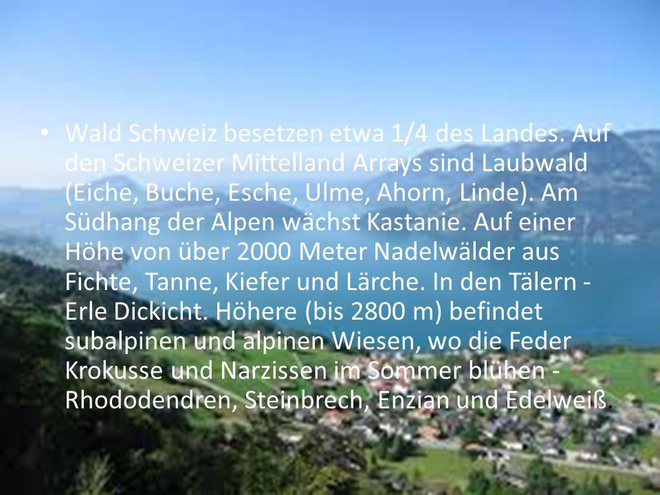 Wald Schweiz besetzen etwa 1/4 des Landes. Auf den Schweizer Mittelland Arrays sind Laubwald (Eiche, Buche, Esche, Ulme, Ahorn, Linde). Am Südhang der