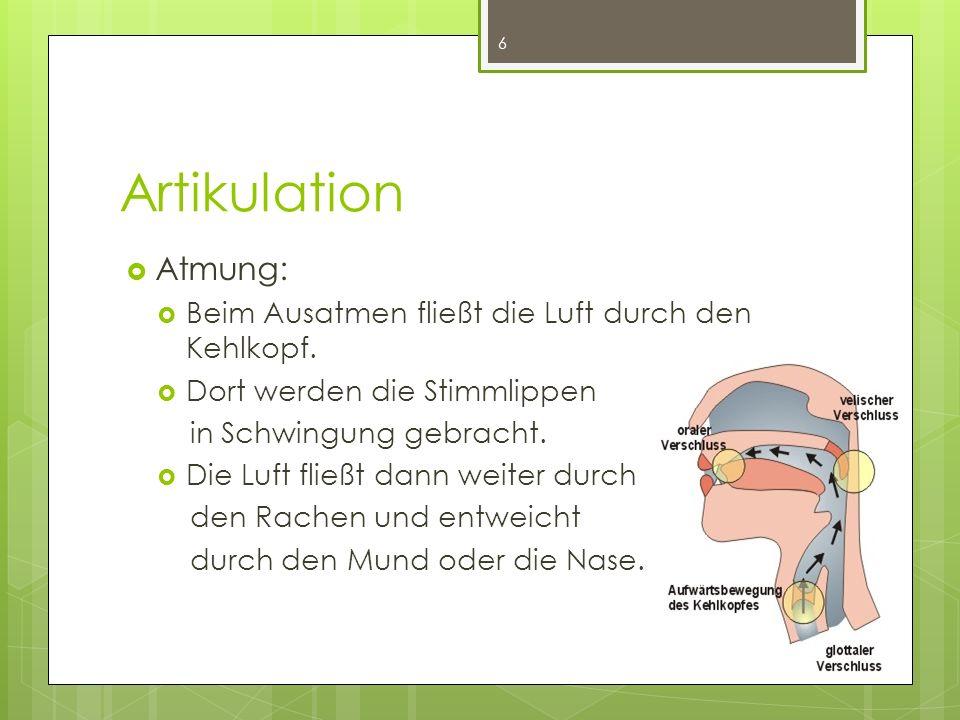 Artikulation Atmung: Beim Ausatmen fließt die Luft durch den Kehlkopf.