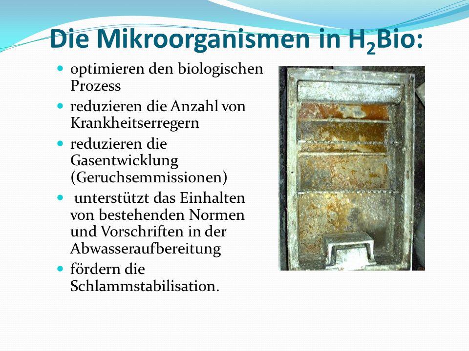 Die Mikroorganismen in H 2 Bio: optimieren den biologischen Prozess reduzieren die Anzahl von Krankheitserregern reduzieren die Gasentwicklung (Geruch