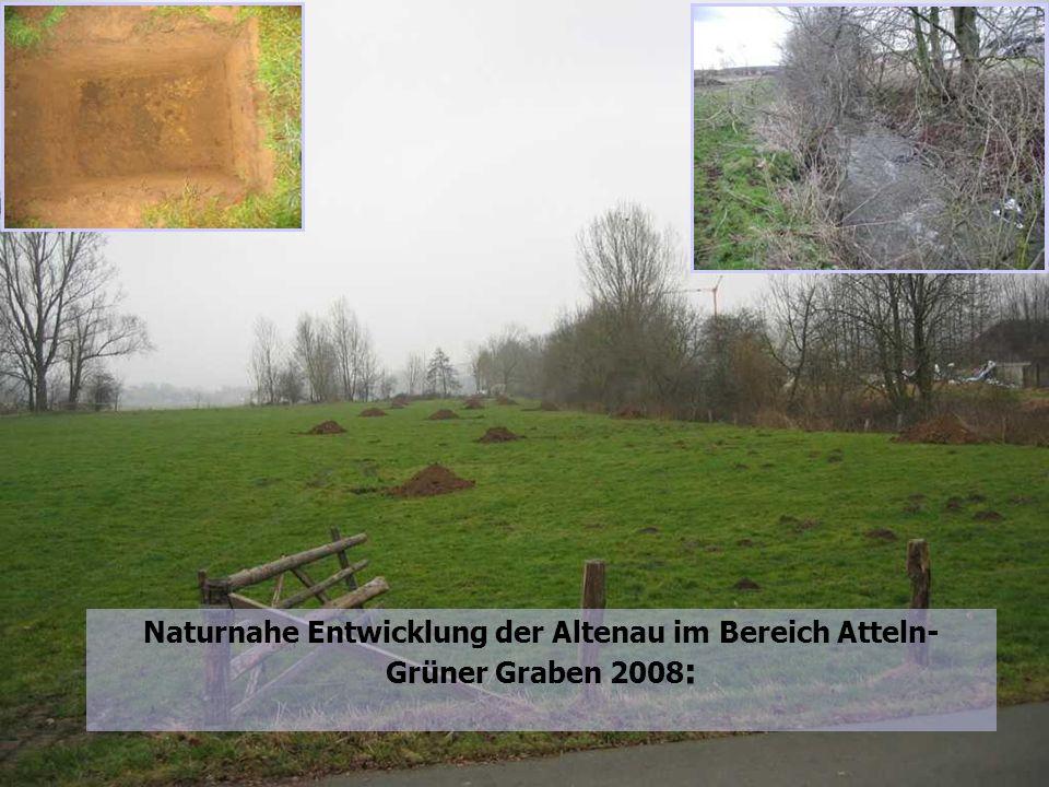 15 Naturnahe Entwicklung der Altenau im Bereich Atteln-Grüner Graben: Naturnahe Entwicklung der Altenau im Bereich Atteln- Grüner Graben 2008 :
