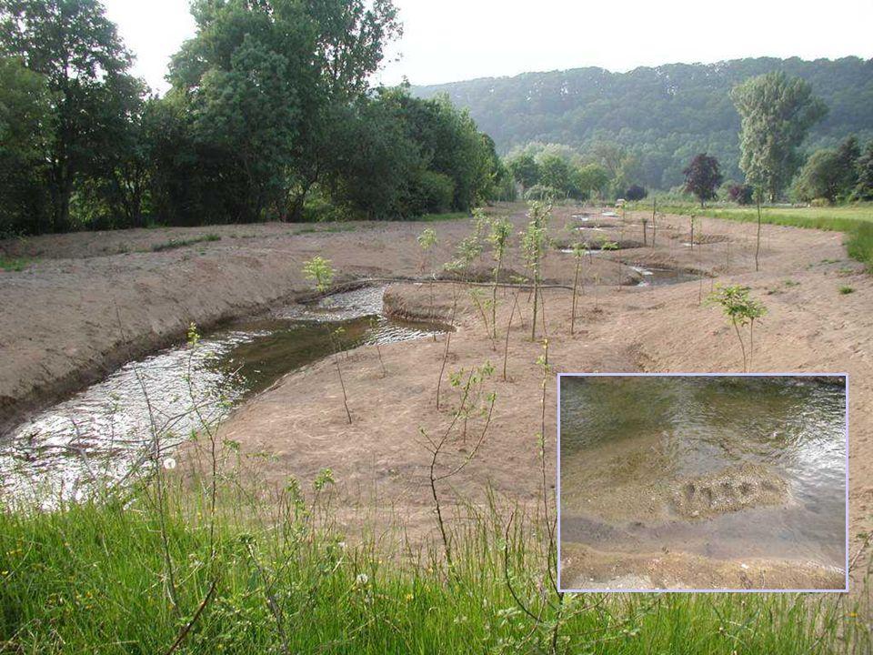 20 Naturnahe Entwicklung der Altenau im Bereich Atteln- Grüner Graben :