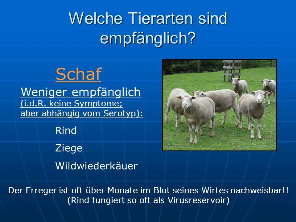 Welche Tierarten sind empfänglich? Weniger empfänglich (i.d.R. keine Symptome; aber abhängig vom Serotyp): Rind Ziege Wildwiederkäuer Schaf Der Errege