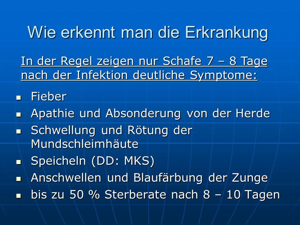 Fieber Fieber Apathie und Absonderung von der Herde Apathie und Absonderung von der Herde Schwellung und Rötung der Mundschleimhäute Schwellung und Rö