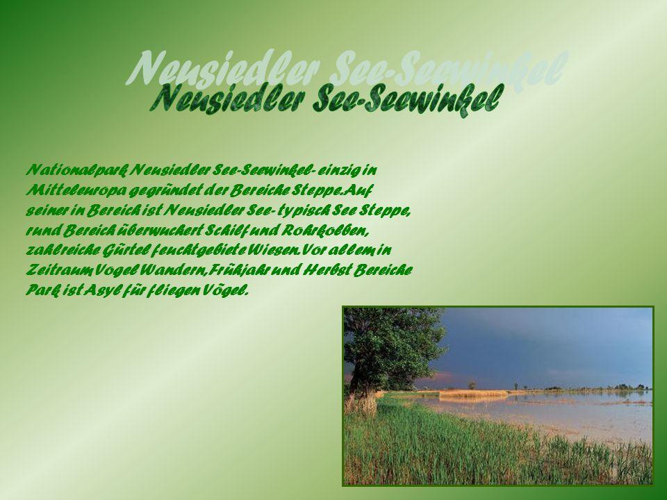 Nationalpark Neusiedler See-Seewinkel- einzig in Mitteleuropa gegründet der Bereiche Steppe. Auf seiner in Bereich ist Neusiedler See- typisch See Ste