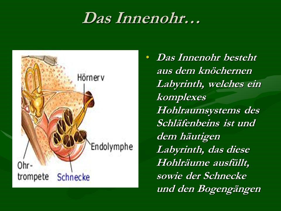 Gehörknöchelchen… Es gibt 3 in der Paukenhöhle…Es gibt 3 in der Paukenhöhle… Nr.1… HammerNr.1… Hammer Nr.2… AmbossNr.2… Amboss Nr.3… SteigbügelNr.3… S