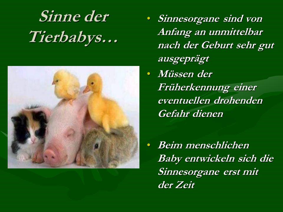 Der Mensch… Jung und Alt Der Mensch… Jung und Alt Babys können nach der Geburt zum Beispiel nicht gleich super sehen…Babys können nach der Geburt zum