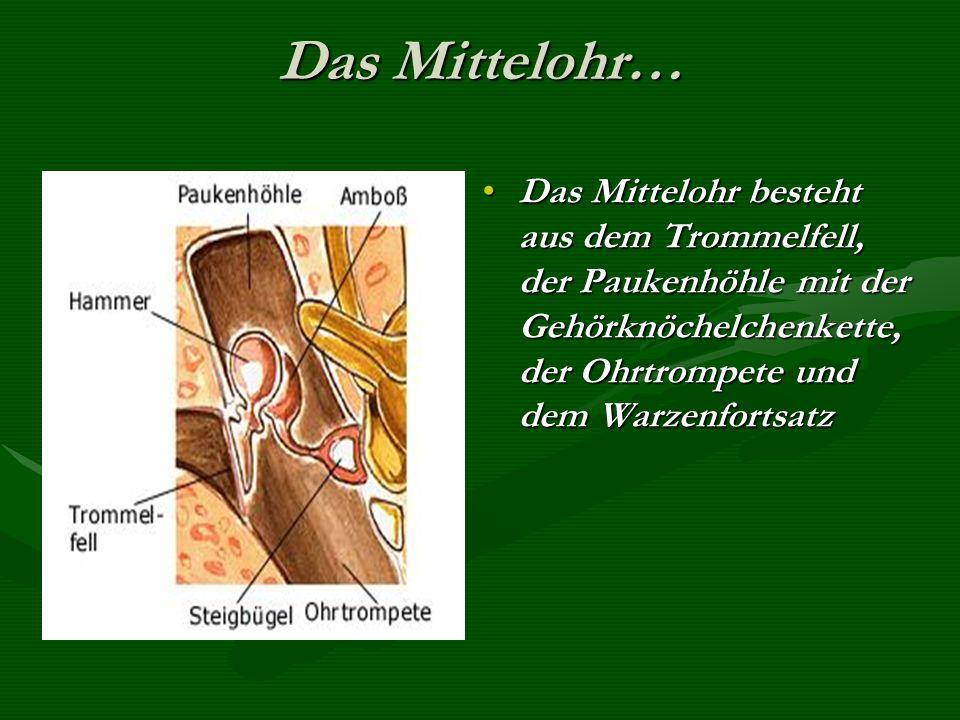 Das Mittelohr… Das Mittelohr besteht aus dem Trommelfell, der Paukenhöhle mit der Gehörknöchelchenkette, der Ohrtrompete und dem Warzenfortsatz