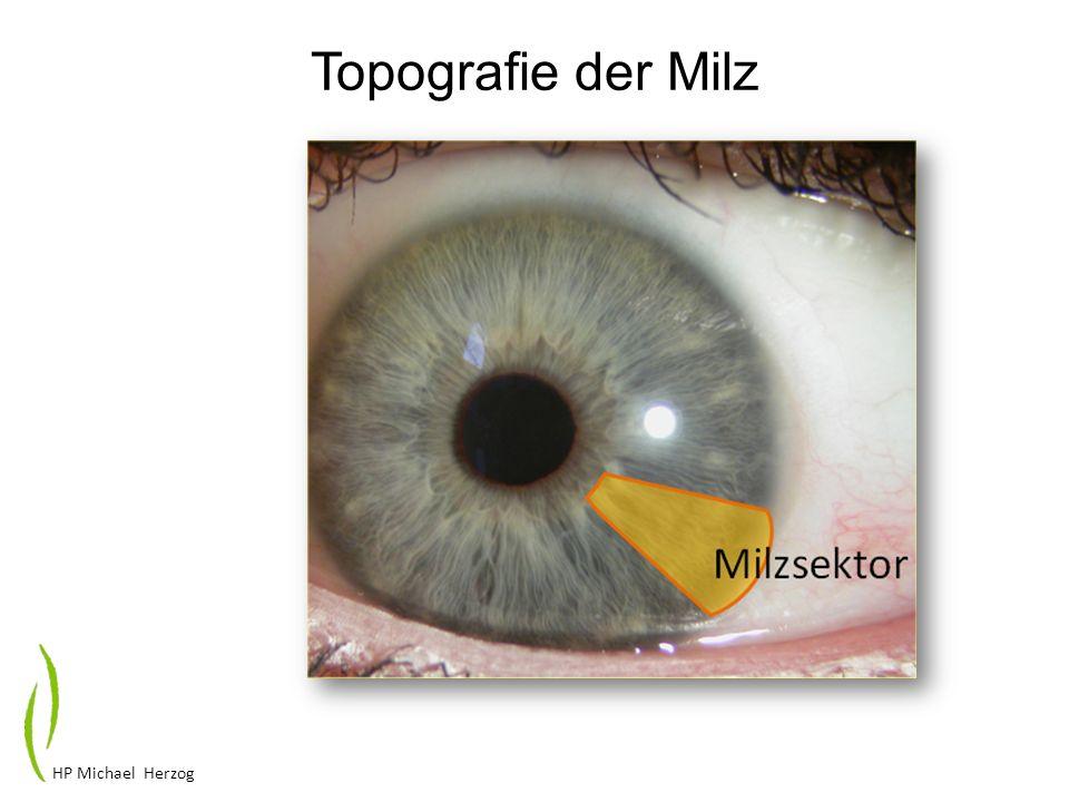 HP Michael Herzog Topografie der Milz