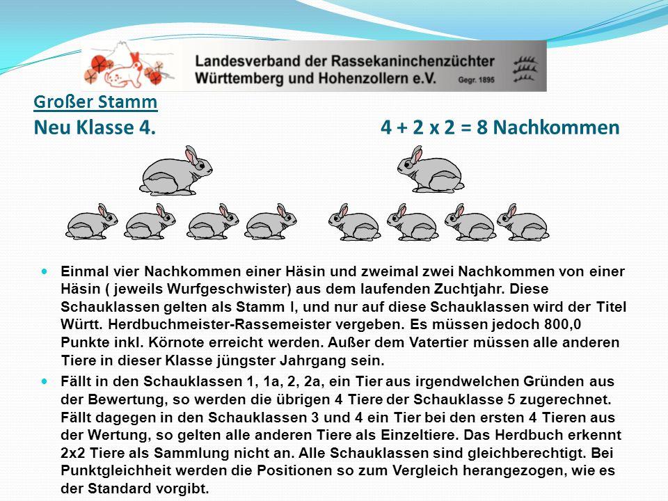Großer Stamm Neu Klasse 4. 4 + 2 x 2 = 8 Nachkommen Einmal vier Nachkommen einer Häsin und zweimal zwei Nachkommen von einer Häsin ( jeweils Wurfgesch