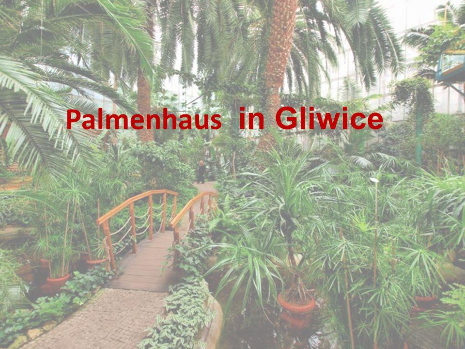 Städtisches Palmenhaus ist das drittgrößte Objekt dieser Art in Polen.