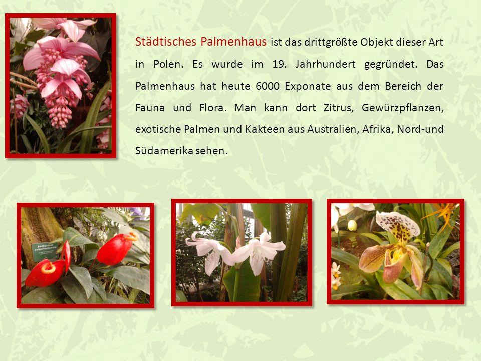 Unseres Palmenhaus in Gliwice besteht aus mehreren Ausstellungshäusern : Geschichtshaus Tropenhaus Nutzpflanzenhaus Sukkulentenhaus