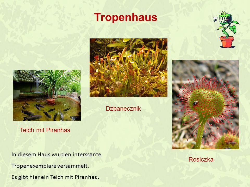 In diesem Haus gibt es alltägliche Pflanzen.Fast jede Gattung hat eine intersannte Vorgeschichte.