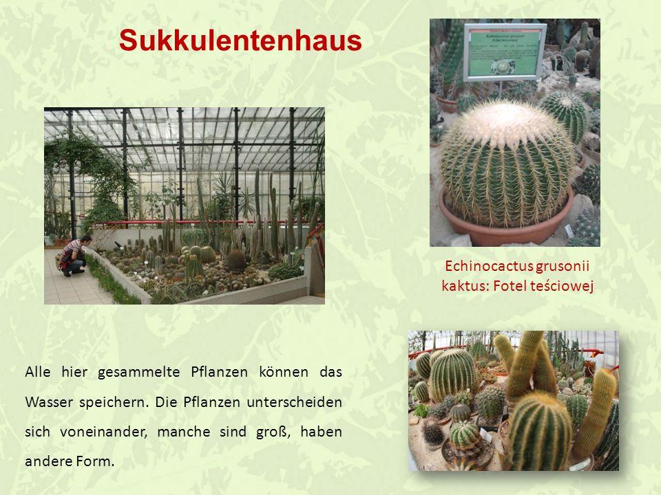 Im Palmenhaus werden verschiedene Ausstellungen organisiert.