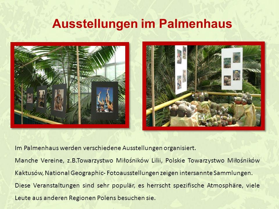 Im Palmenhaus wir können viele Tiere sehen. Legwan Lancetogłów mleczny Gekon Aksolot meksykański