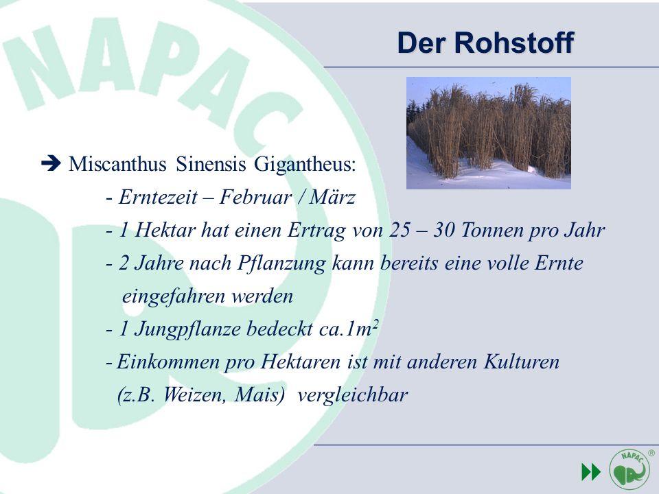 Miscanthus Sinensis Gigantheus: - Erntezeit – Februar / März - 1 Hektar hat einen Ertrag von 25 – 30 Tonnen pro Jahr - 2 Jahre nach Pflanzung kann ber
