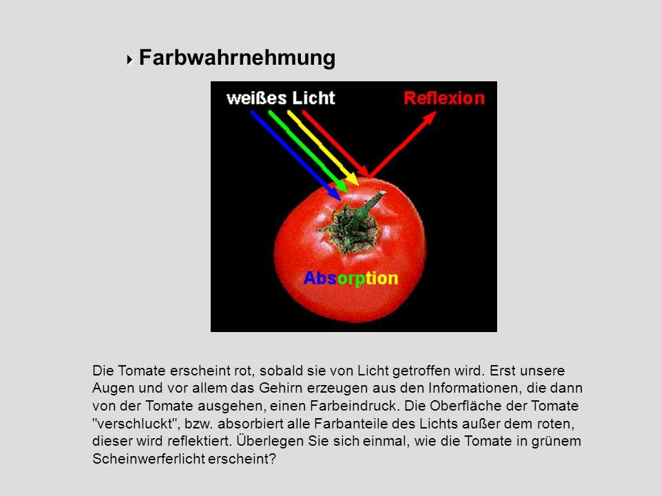 Farbwahrnehmung Die Tomate erscheint rot, sobald sie von Licht getroffen wird. Erst unsere Augen und vor allem das Gehirn erzeugen aus den Information