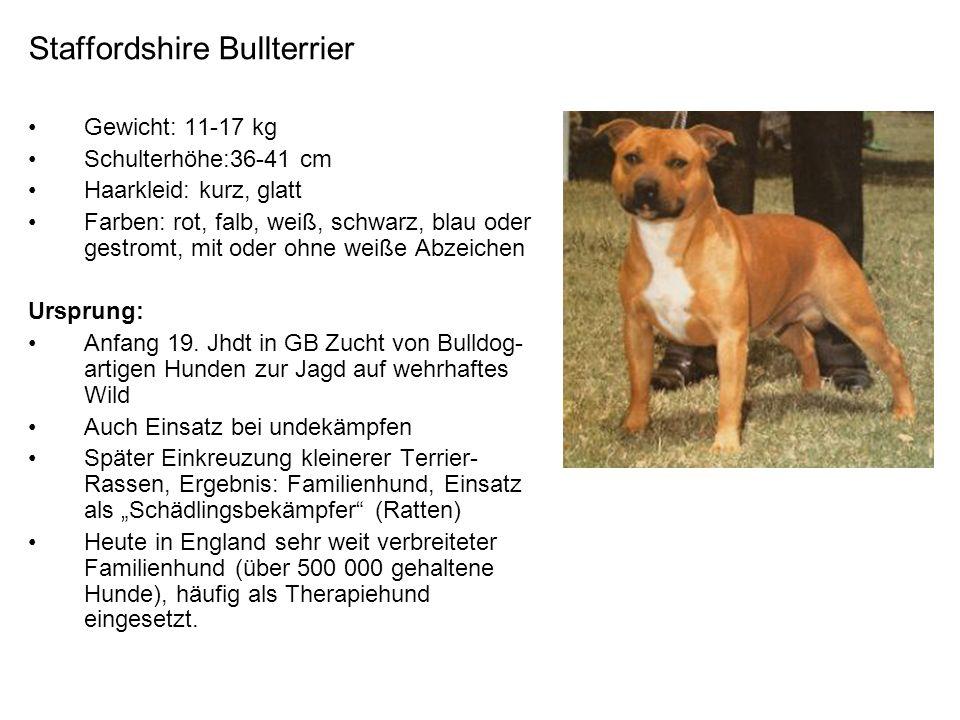 Staffordshire Bullterrier Gewicht: 11-17 kg Schulterhöhe:36-41 cm Haarkleid: kurz, glatt Farben: rot, falb, weiß, schwarz, blau oder gestromt, mit ode