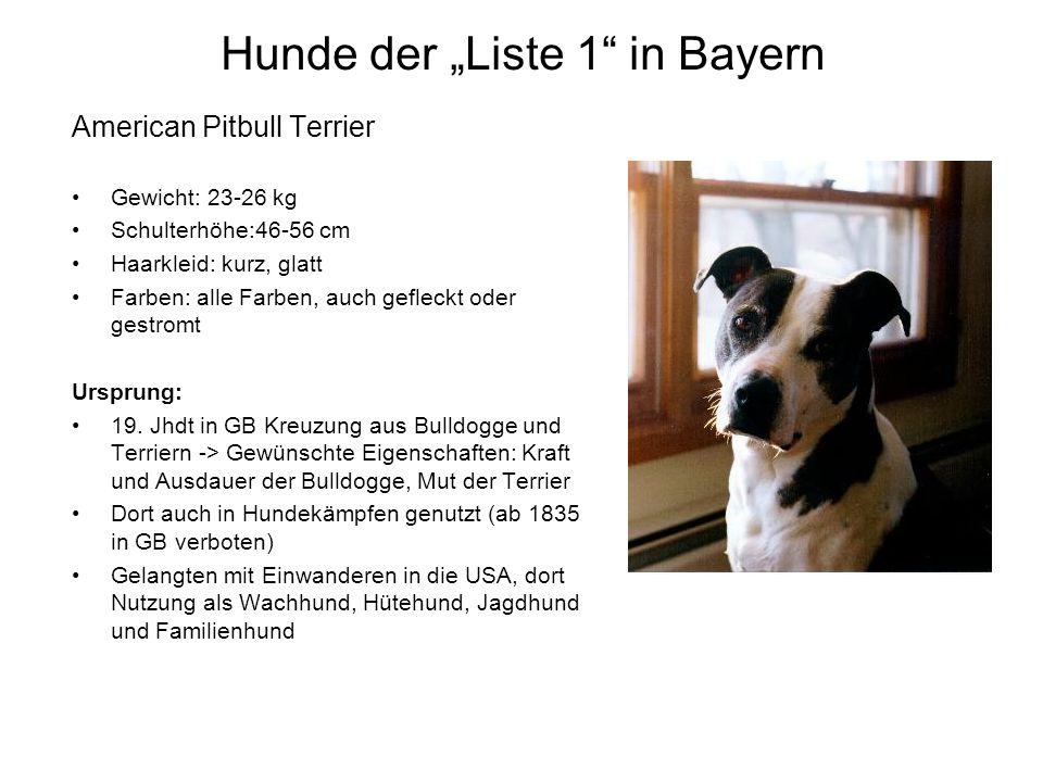 Hunde der Liste 1 in Bayern American Pitbull Terrier Gewicht: 23-26 kg Schulterhöhe:46-56 cm Haarkleid: kurz, glatt Farben: alle Farben, auch gefleckt