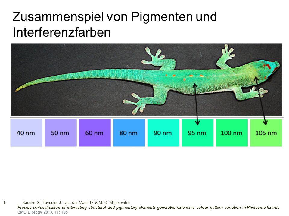Zusammenspiel von Pigmenten und Interferenzfarben 1.Saenko S., Teyssier J., van der Marel D. & M. C. Milinkovitch Precise co-localisation of interacti