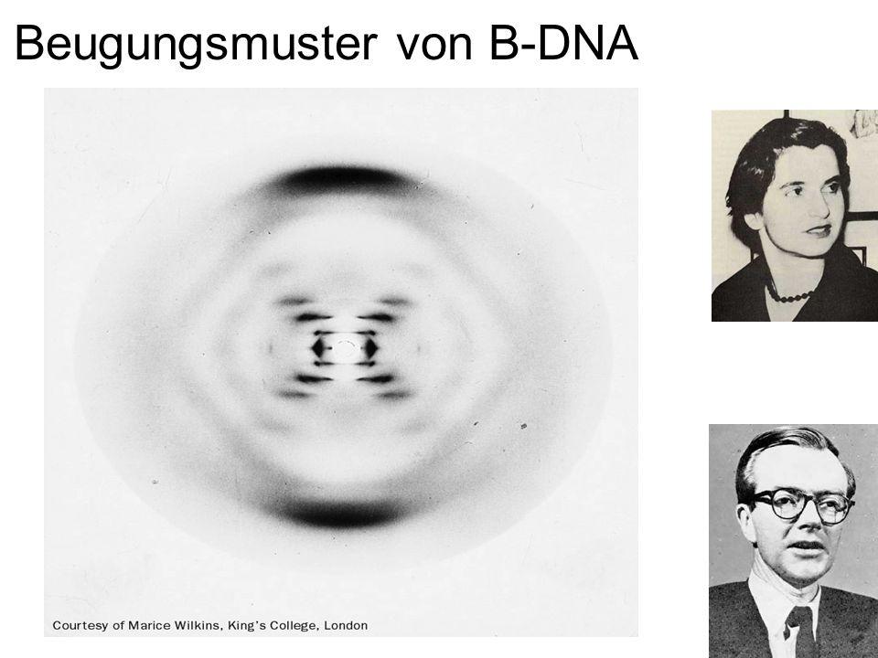 Beugungsmuster von B-DNA