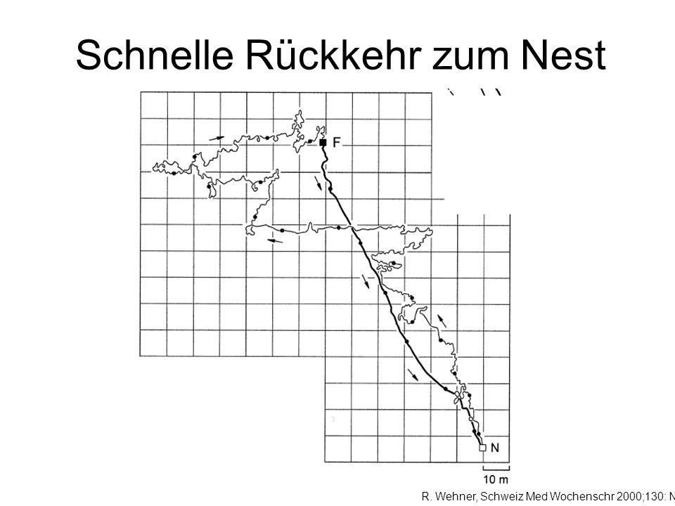 Schnelle Rückkehr zum Nest R. Wehner, Schweiz Med Wochenschr 2000;130: Nr 8