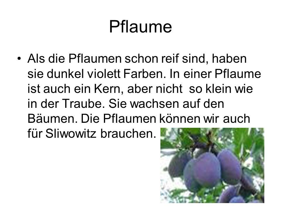Pflaume Als die Pflaumen schon reif sind, haben sie dunkel violett Farben.