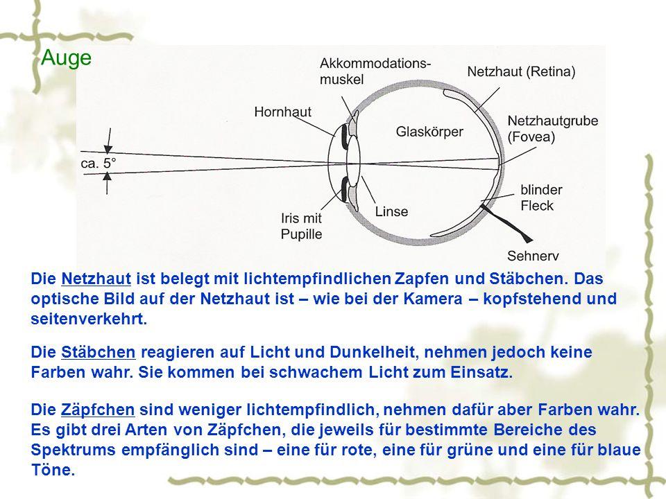 Die Netzhaut ist belegt mit lichtempfindlichen Zapfen und Stäbchen. Das optische Bild auf der Netzhaut ist – wie bei der Kamera – kopfstehend und seit