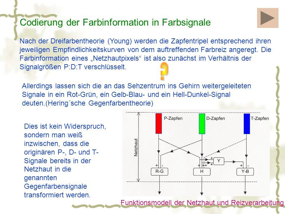 Funktionsmodell der Netzhaut und Reizverarbeitung Codierung der Farbinformation in Farbsignale Nach der Dreifarbentheorie (Young) werden die Zapfentripel entsprechend ihren jeweiligen Empfindlichkeitskurven von dem auftreffenden Farbreiz angeregt.