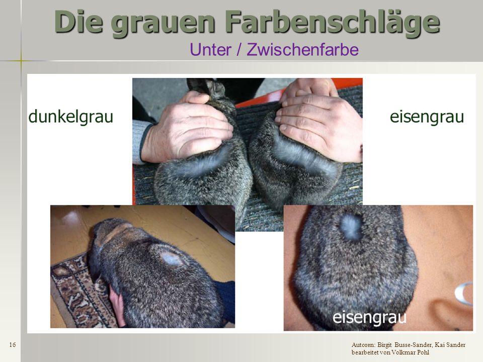 15Autoren: Birgit Busse-Sander, Kai Sander bearbeitet von Volkmar Pohl Die grauen Farbenschläge Bauchdeckfarben