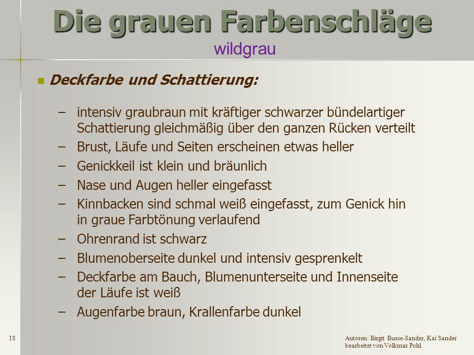 17Autoren: Birgit Busse-Sander, Kai Sander bearbeitet von Volkmar Pohl Die grauen Farbenschläge wildgrau Zugelassene Rassen: DR, DW, EW, GrW, DKlW, H, ZwW und Fzw